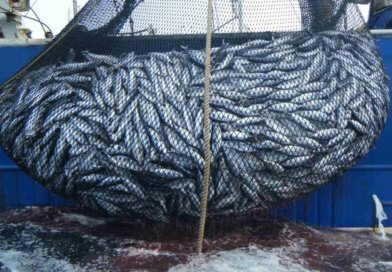 Fishing for sardines is forbidden from Saturday 12 October