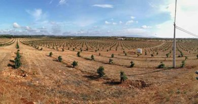 Avocado Plantage Algarve
