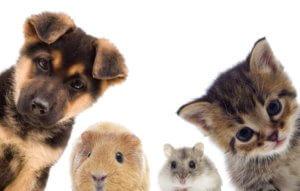 Haustiersteuer