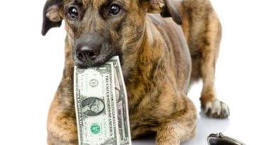 Steuer für Haustier