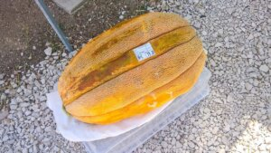 19 kg Melone