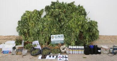 cannabis-aljezur