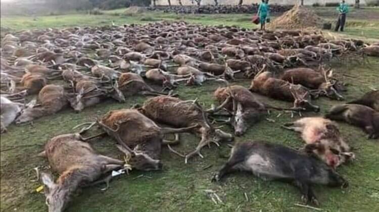 Totes Wild in Azambuja