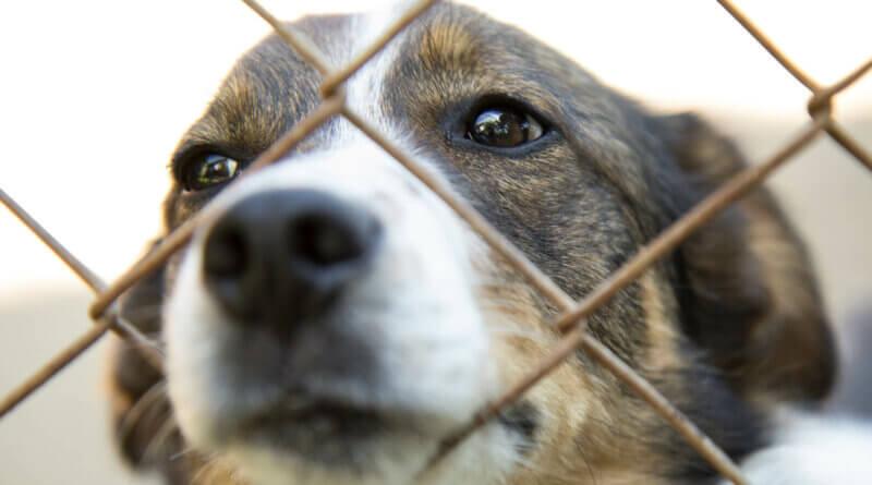 Hund in Käfig